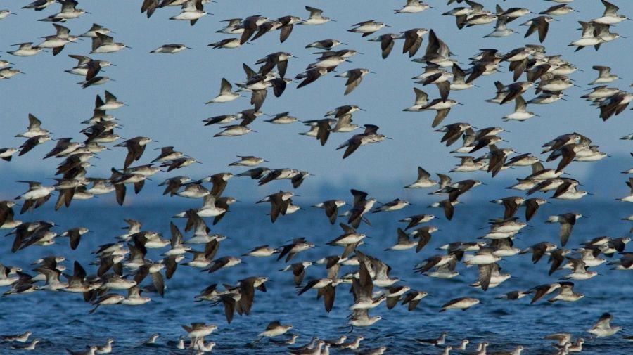 Avistaje de aves en Neuquén