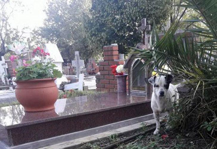 Perro en la tumba de su deueño 05092018