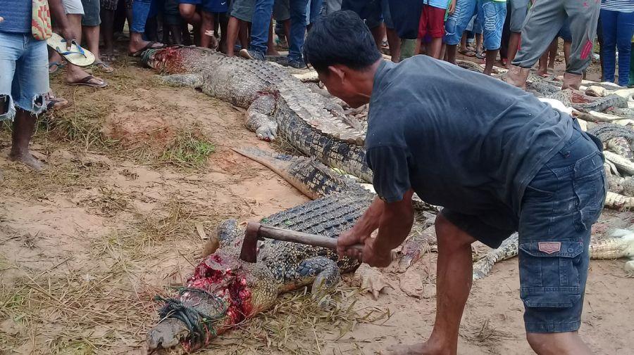 matanza de cocodrilos en indonecia