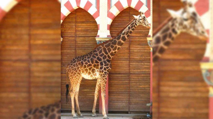 animales-eco-parque-07252018-01