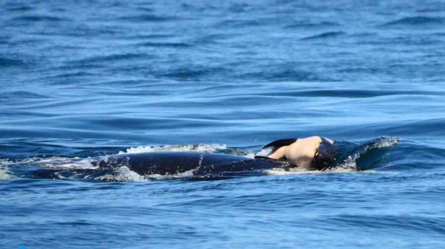 Orca y su cria08012018