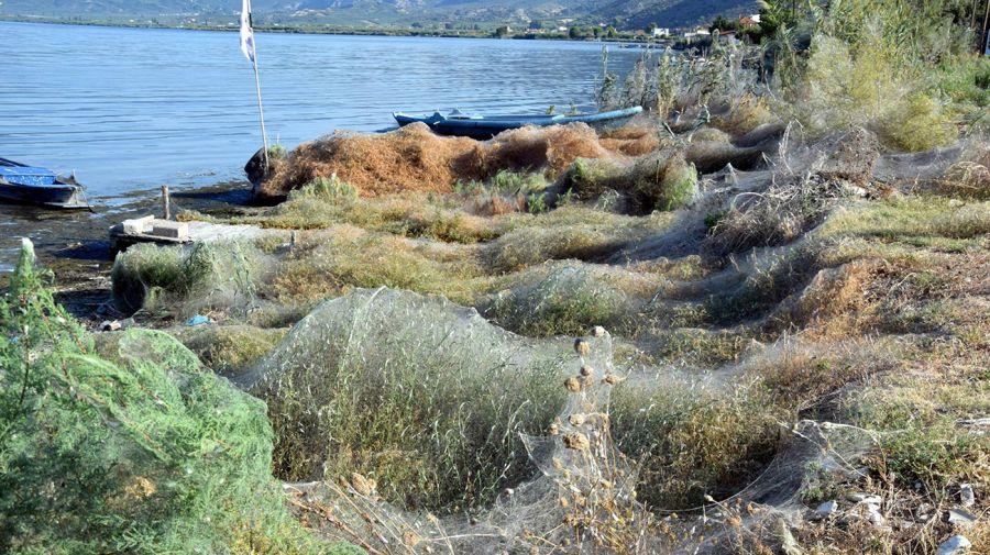 lago-grecia-telaraña