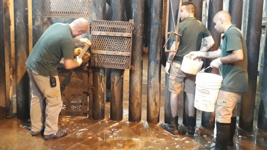 Los cuidadores limpian y desinfectan a la elefanta Mara.