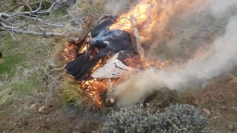 condores envenenados patagonia