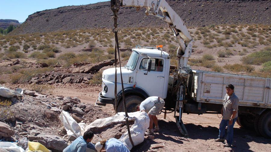 restos de dinosaros en Neuquén 11022018