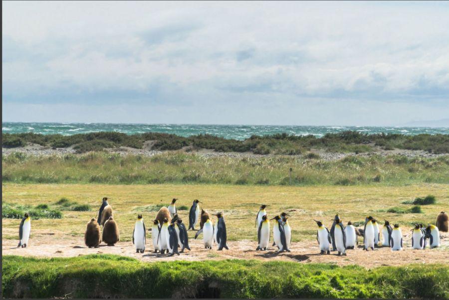 1126_17 Parques Nacionales unidos en Chile