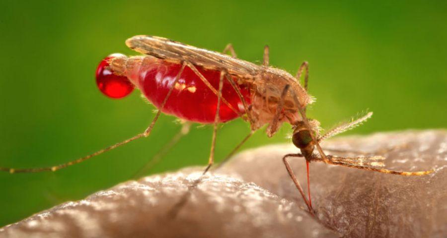 1129_porquepicanmosquitos