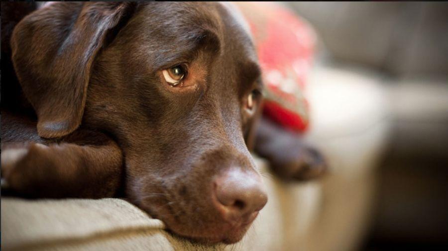 ¿Tienen sentimientos los perros?