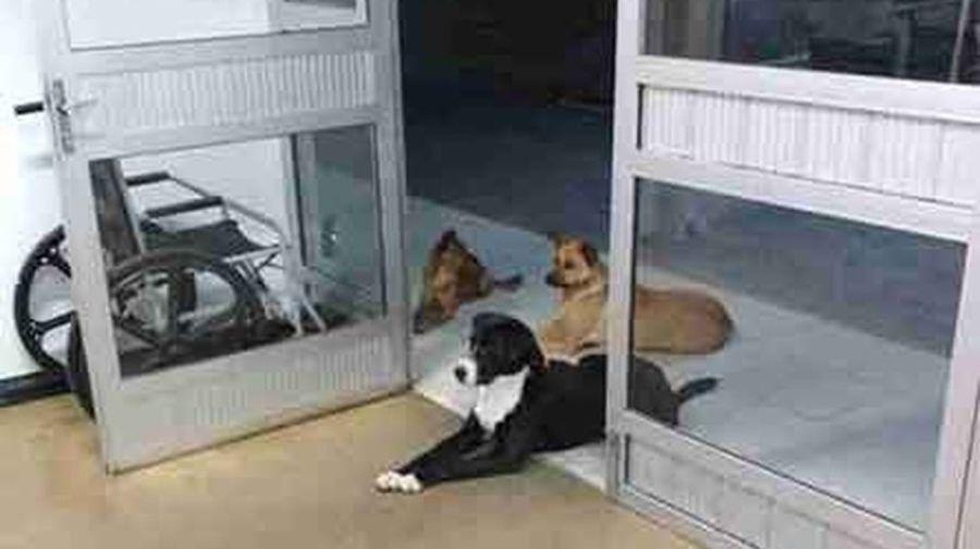 Cuatro perros esperan a su dueño a la puerta de un hospital