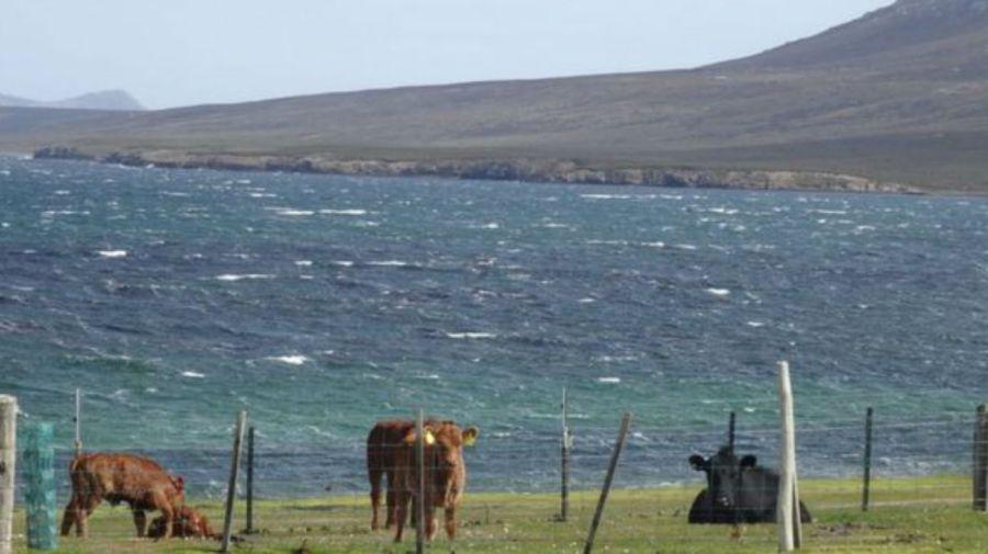 familia gales islas malvinas g2 12142018