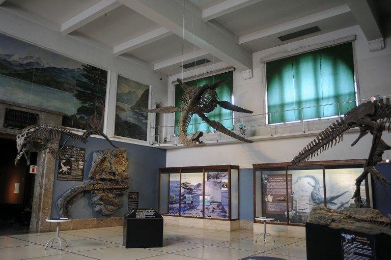 dinosaurio marino calafate afp