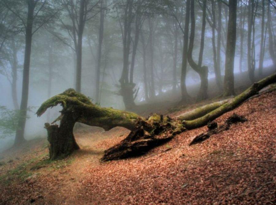 1224_Los árboles y el calentamiento global