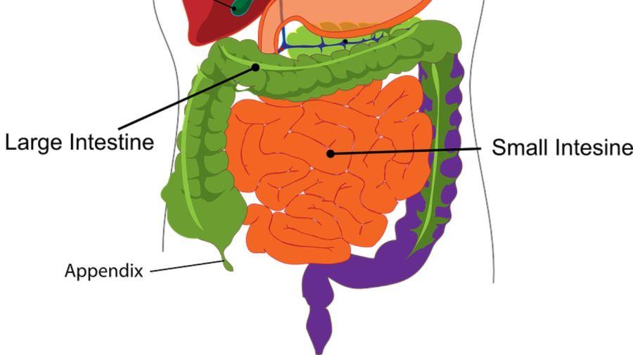 apendice 2 g_20190123