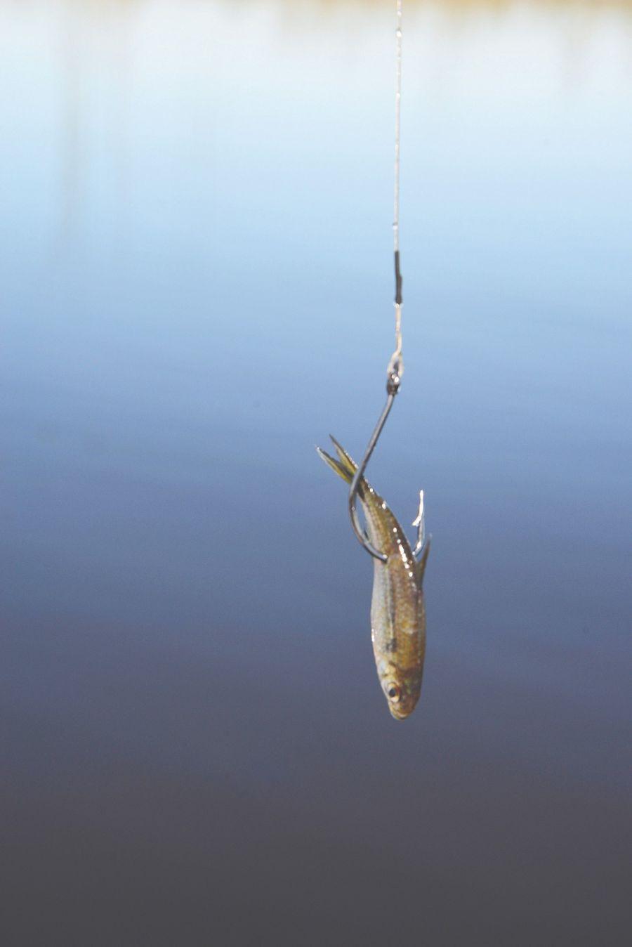 0125_12 lagunas para pescar en verano