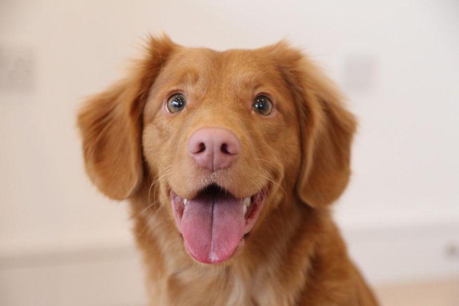 0202_Investigadores caninos