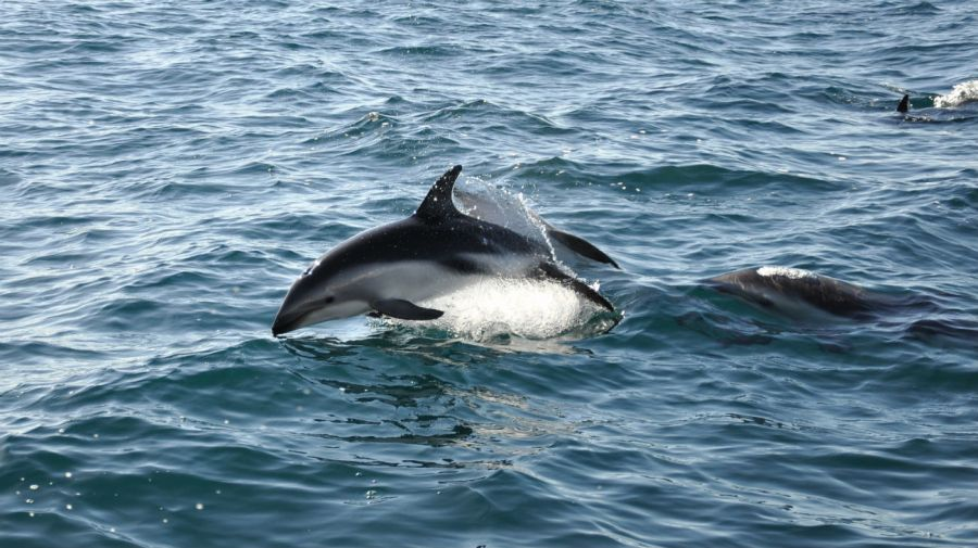 0218_delfines