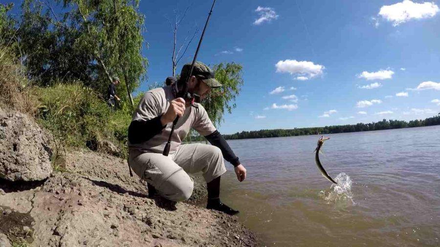 Río Paraná: variada con buenos colmillos 1
