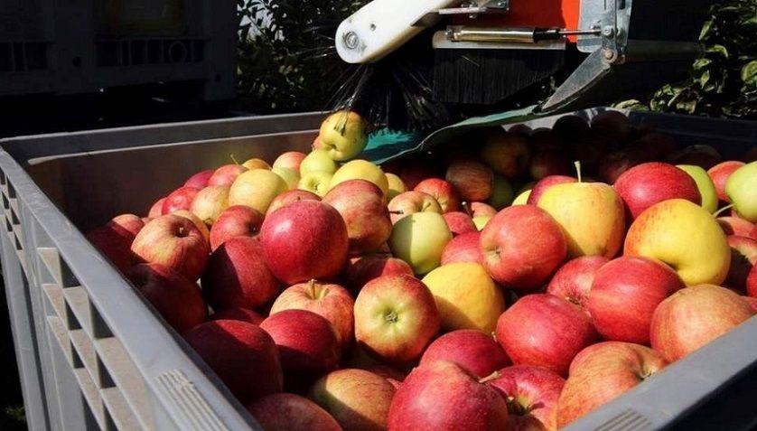 El año pasado la Argentina exportó a Brasil peras y manzanas por 120.000 toneladas, un 20% más que en 2017.