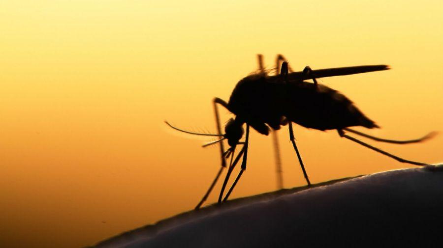 0315_mosquitos