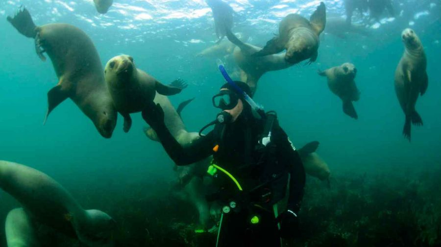 0325_Buceo