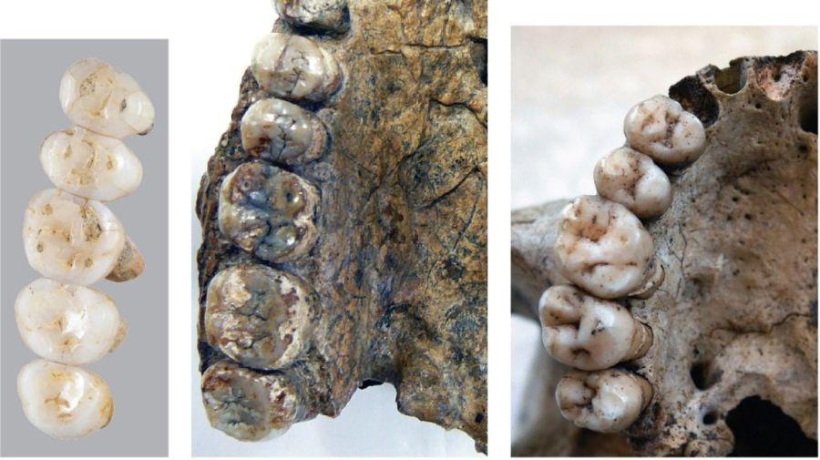 hallazgo restos fosiles 1 04112019