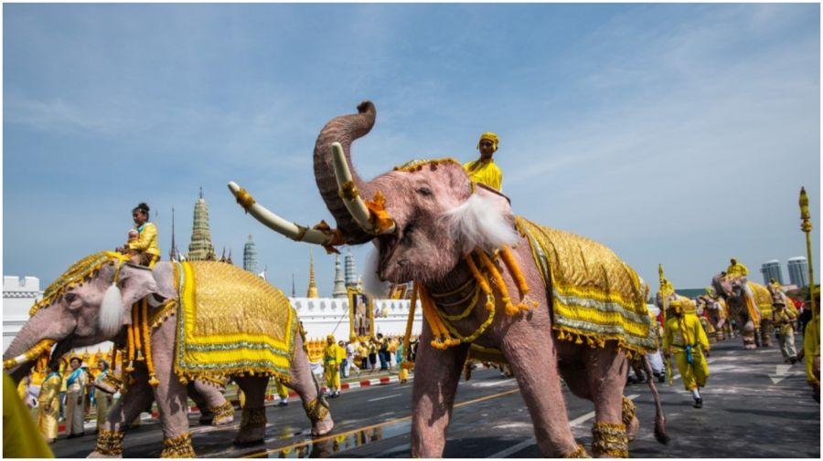 Tailandia: elefantes se arrodillan para reverenciar al nuevo rey.