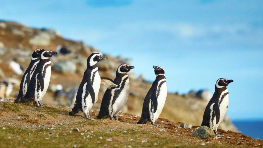 0515 naturales en Santa Cruz y Tierra del Fuego