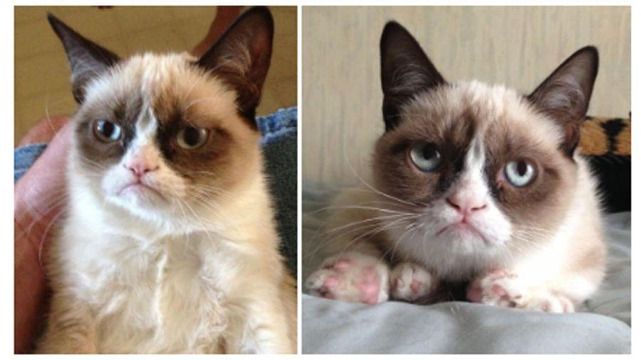 Las fotos que catapultaron a Grumpy Cat a la fama.