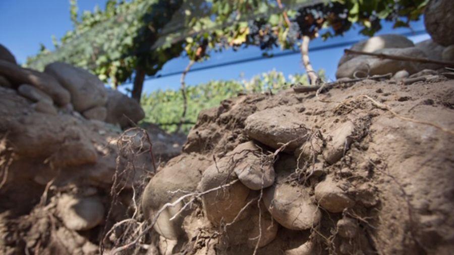 2019 cosecha vinos argentinos excelente vinos premium memorable