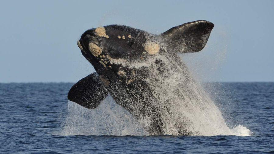 0610 temporada de avistaje de ballenas