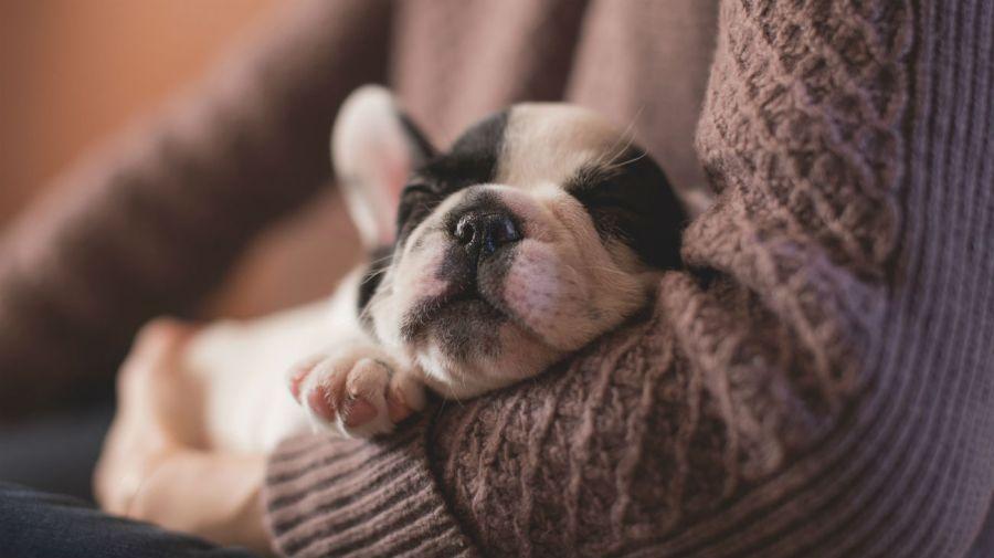 Los perros tienen ciertos rasgos que los hacen adorables al ojo humano.