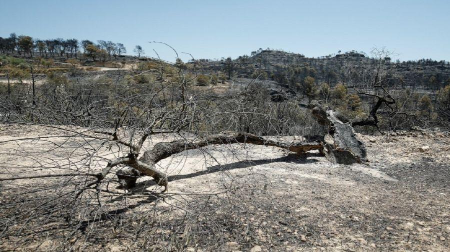 Ola de calor en Francia y España. Incendio en 6.500 hectáreas.