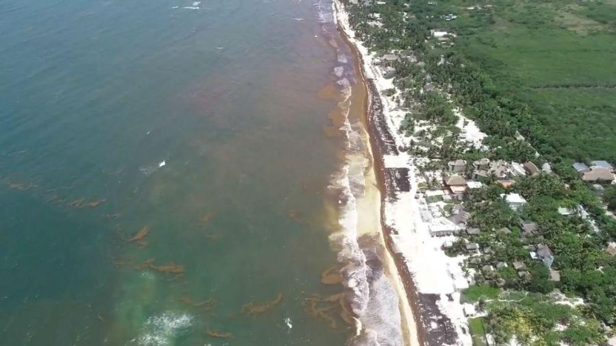 Así se ve desde un dron la plaga de sargazo en Tulum.