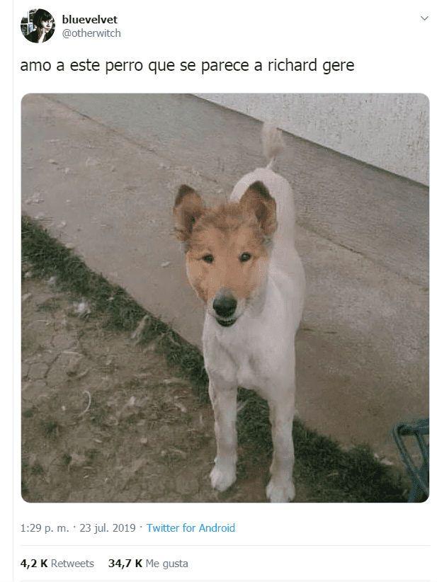 Richard Gere Vs un perro