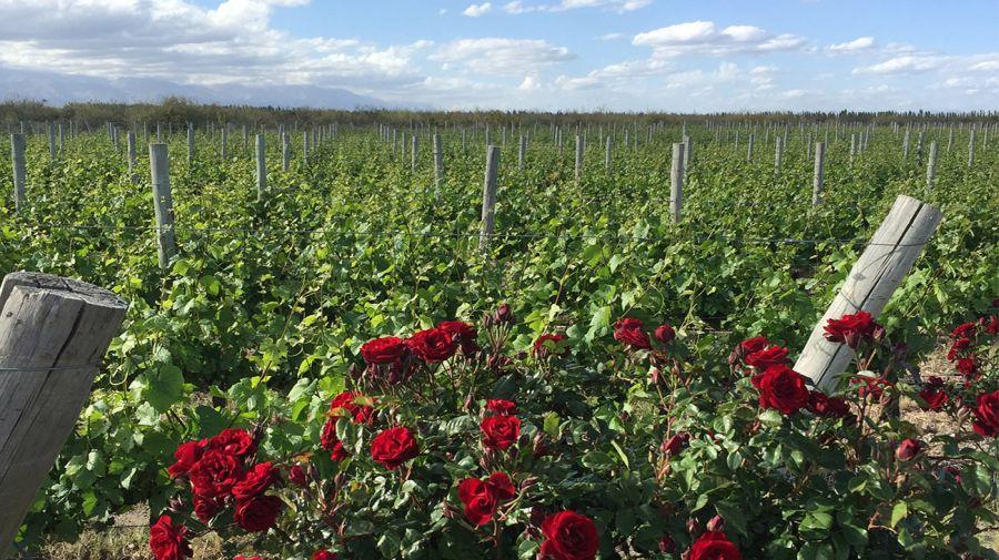 Dia Internacional Pinot Noir