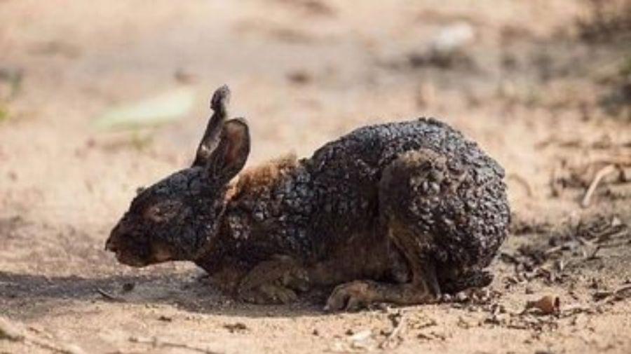 conejo quemado 08232019