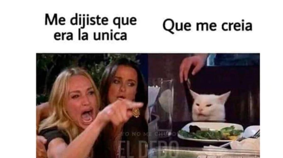meme gato 08302019