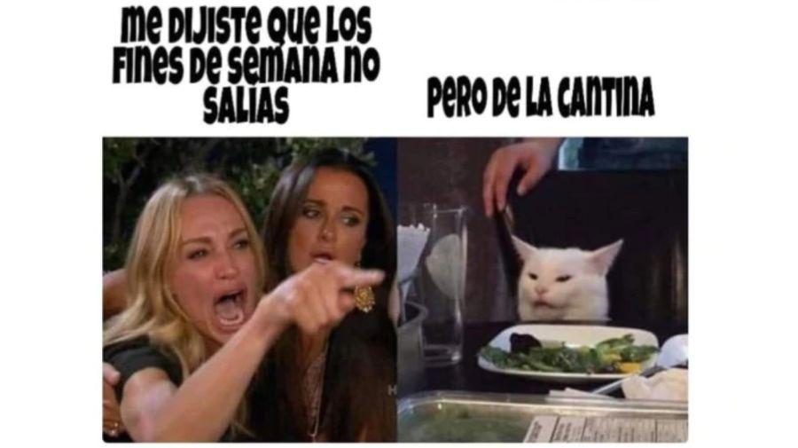 meme gato 5 08302019