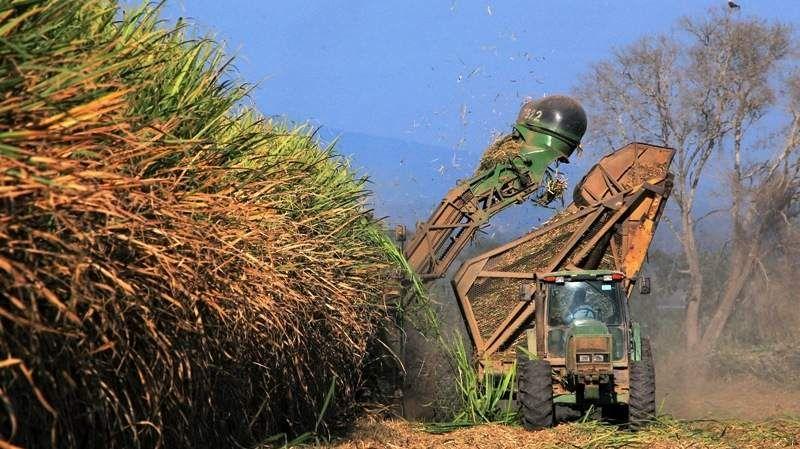 CONVOCATORIA. Alrededor de 2.000 personas de 24 países estuvieron presentes en el Congreso Internacional de la Caña de Azúcar.
