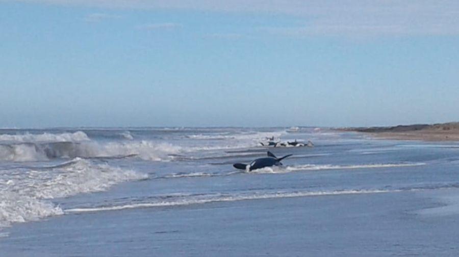 orcas varadas 09162019