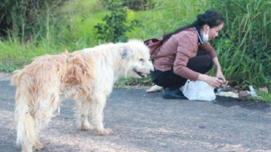 perro tailandia 09182019