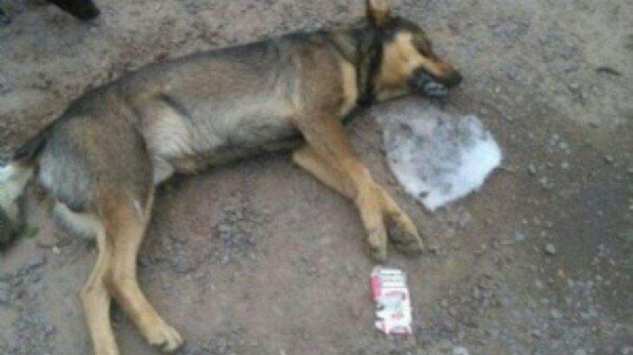 perro envenenado 10082019