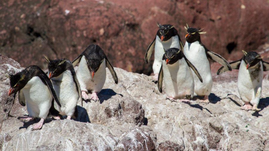 1021_pinguino4