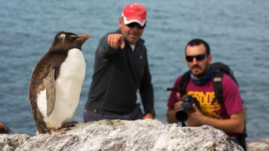 1021_pinguino5