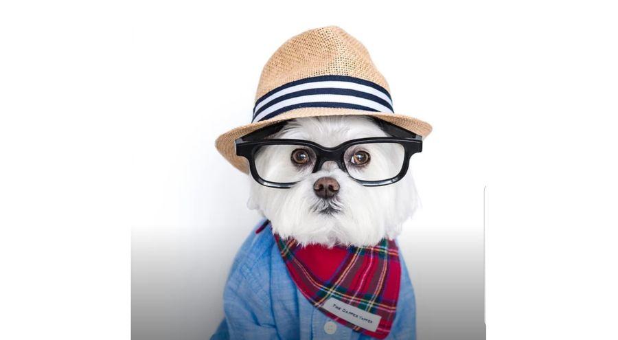 Instanimales: los perros también pueden ser influencers
