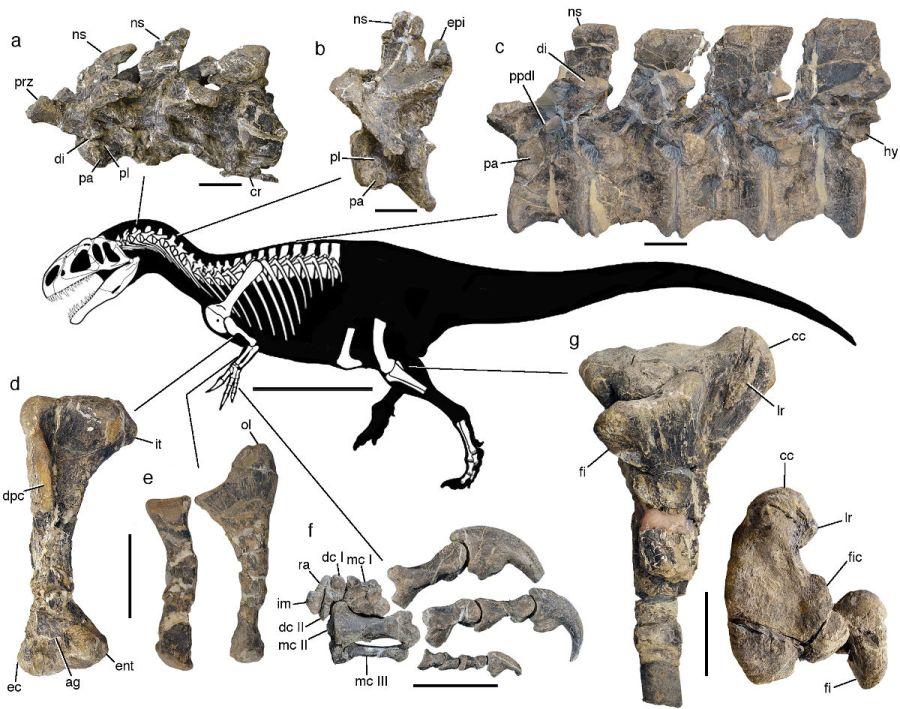 esqueleto dinosaurio chubut