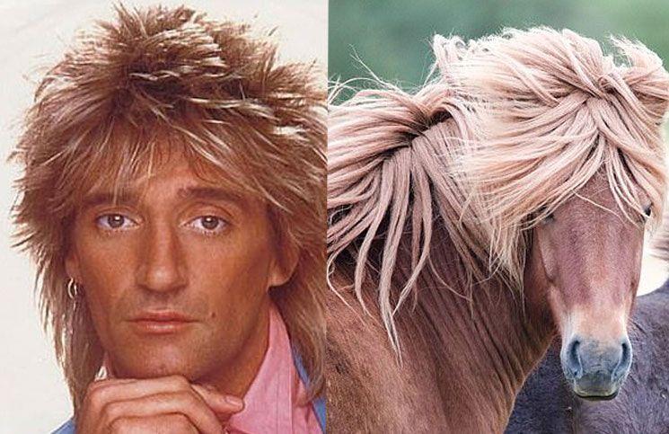 El increíble parecido de Rod Stewart y un caballo