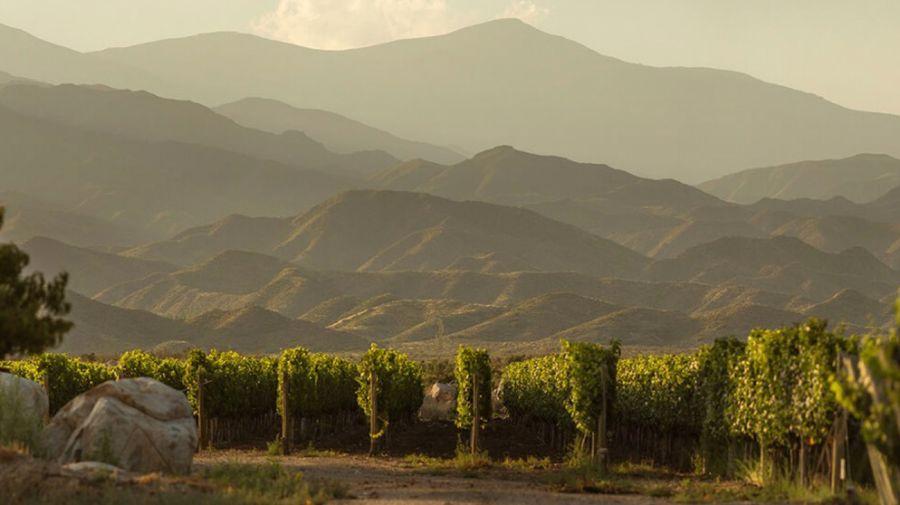 Bodega Salentein viñedos