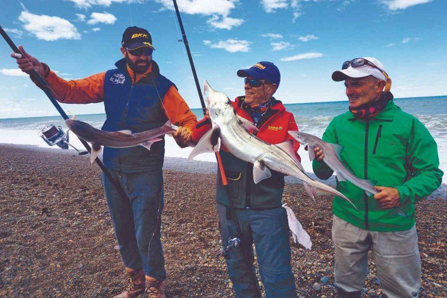 2801_tiburones_rocas_coloradas