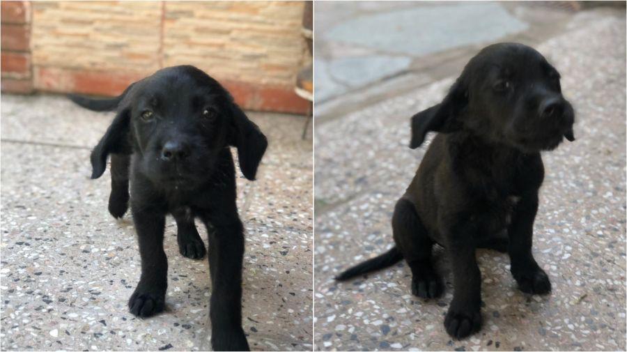 perro adoptado 06032020